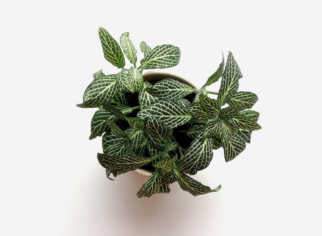 mademoiselle plante 013