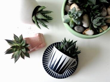 plantes-059